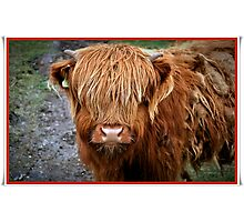 Who are you staring at???????????????? Photographic Print