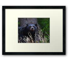 Black Bear Smile Framed Print