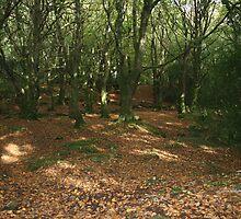 Bearna woods by John Quinn