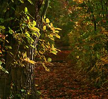 Autumn Trail by Christopher  Malatesta