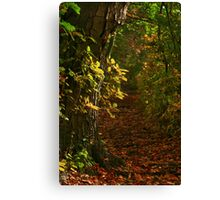 Autumn Trail Canvas Print
