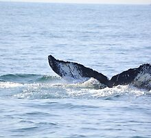 Humpback Whale Tail by Sunshinesmile83