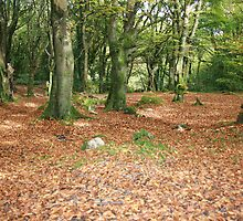 Bearna woods 2 by John Quinn