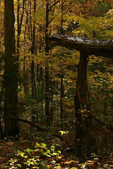 Autumn Yellow by Christopher  Malatesta