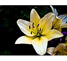 White Lily in the garden 2 Photographic Print