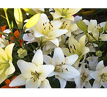 White Lily in the garden 8 Photographic Print