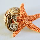Seahorse, Starfish, and Shell by Sunshinesmile83