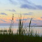 Beach Grass Sunset by Sunshinesmile83