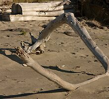 Driftwood Square by RolandTumble