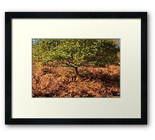 Autumn Tree and Ferns Framed Print