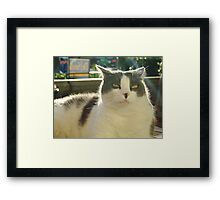 Ivan Framed Print