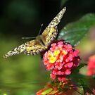 Flowing Wings by Pat Moore