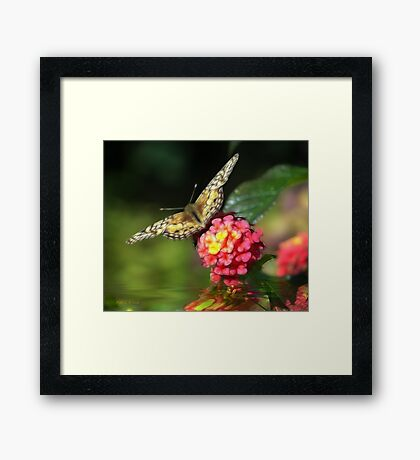 Flowing Wings Framed Print