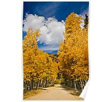 Aspen Path Poster