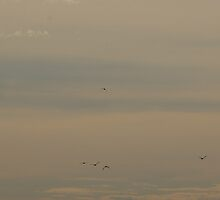 BIRDS AT SUNRISE by leanimal