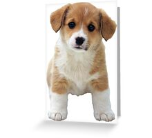 A Little Puppy Greeting Card