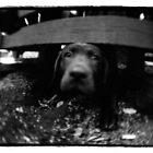 dog under bench by mike schreiber