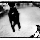 jumping dog by mike schreiber