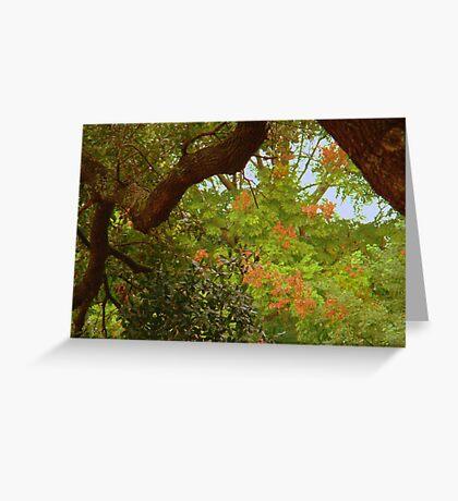 Trees In My Neighborhood Greeting Card