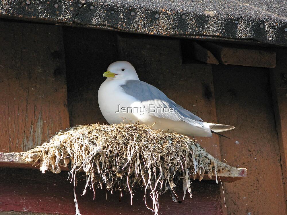 Nesting Seagull by Jenny Brice