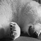 Cuddle Bear by Jan Cartwright