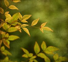 yellow on green by SylviaCook