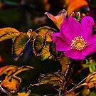 The Last Rose of Summer by David Friederich