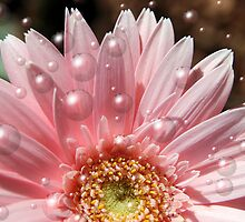 Pink Bubbles by Donna Adamski