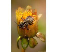 Dare to BEE Different Photographic Print