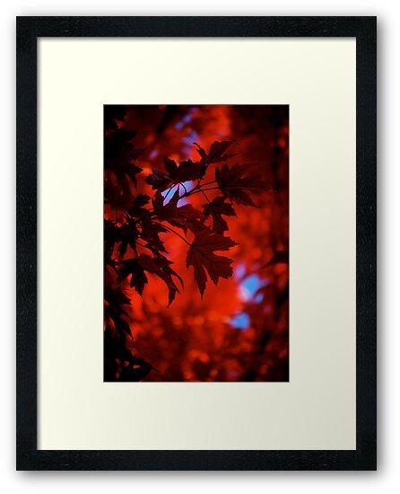 Autumn Blaze by Pamela Hubbard
