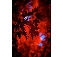 Autumn Blaze Photographic Print