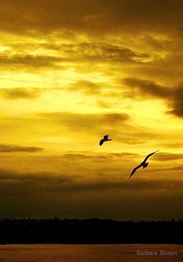 Golden Sunset on Puget sound by Barbara  Brown