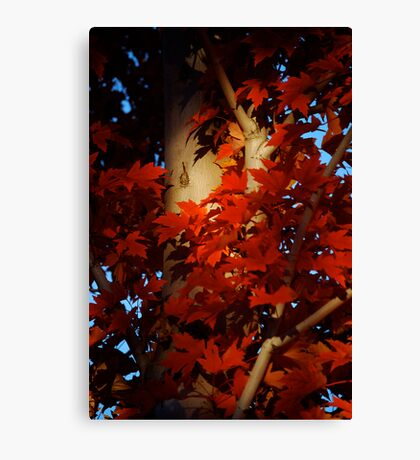 Autumn Blaze III Canvas Print