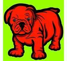 Grumpy Bull Dog Puppy Red Photographic Print