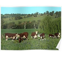 Where The Cows Peacefully Graze Poster
