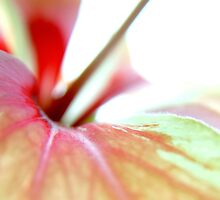 Toffee Apple by Fine Art Photography by Paul Hamilton