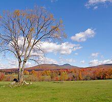 Autumn,s colors #3 by marchello