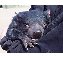 photoj Tassie Devil, 'Having A Hugg' Photographic Print