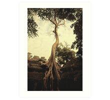 Angkor tree Art Print