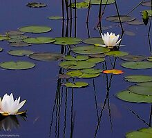 Water Lilies Revisited for the Summer Solstice by Richard VanWart