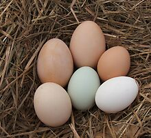 Farm Fresh Eggs by Cherie Carlson