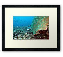 Reefy Framed Print