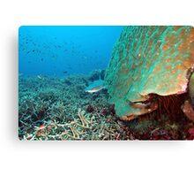 Reefy Canvas Print