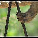 hold on a rope by chen cohen