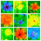 Fractal Flowers collage by Jo Newman