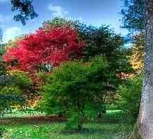 Westonbirt Arboretum  by NalaRewop