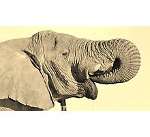 Elephant Bull - Joyful Water Photographic Print