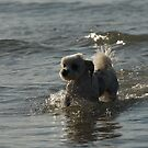 Belle at the Beach by KeepsakesPhotography Michael Rowley