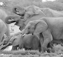 Elephant Family - Tusks and Trunks by LivingWild