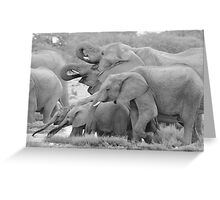 Elephant Family - Tusks and Trunks Greeting Card